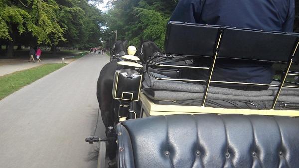 Bakken häst